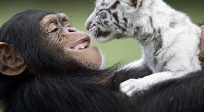 Incroyable improbables amitiés entre animaux : Compilation