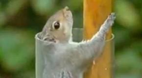 écureuil / mission impossible