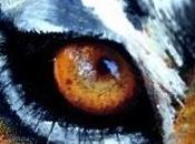 Maquillage artistique : œil de tigre