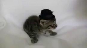 Un chat qui gifle un chien